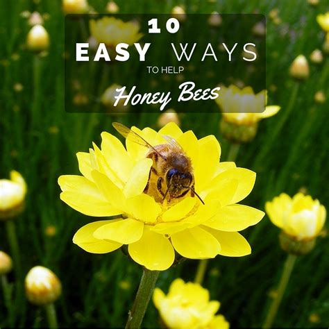 the bee friendly garden easy ways to help the bees and make your garden grow books simply bee