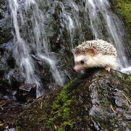 Adventures In Hedgehogging Little Critters