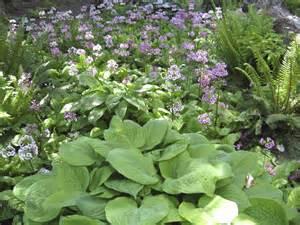 garten neu bepflanzen schattengarten ideen zur bepflanzung gartengestaltung