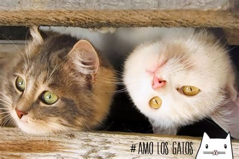 imagenes sarcasticas de gatos im 225 genes de gatos bonitos en graciosas situaciones