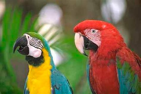 national pet show to feature parrot displays from a world