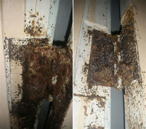 bed bugs in apartment who pays this landlord has made it so bad for his tenants that they