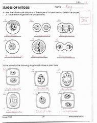 Best 25+ ideas about Mitosis Worksheet Answer Key | Find what you'll ...