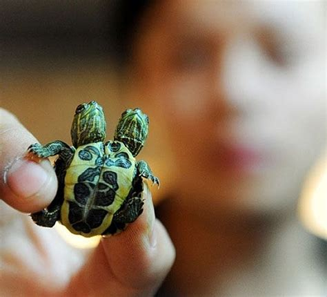25  best ideas about Cute Turtles on Pinterest   Baby