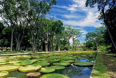 Mauritius Botanical Garden Mauritius Botanical Garden Mauritius Island Pinterest