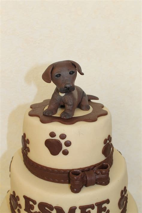 brown labrador puppy brown labrador puppy cakecentral