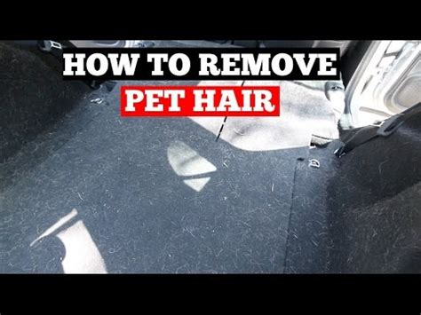 removing dog hair from car upholstery how to remove pet hair from car interior car detailing
