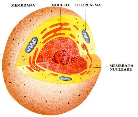 test sulla cellula rete intercultura materiali didattici scienze
