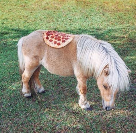 mini pony 13 mini horses who hardly even look real
