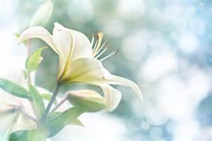 white flowers flower meaning