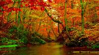 Autumn Forest Wallpaper For Desktop  HD Wallpapers Backgrounds Of