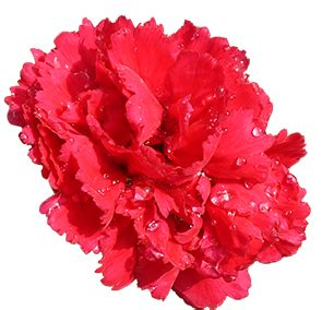 Making Greeting Cards From Photos - flower image gallery useful floral clip art