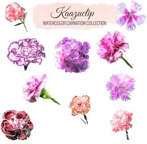 check out watercolor carnation collection by kaazuclip on