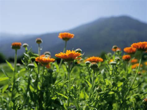 giardini botanici merano giardini botanici hotel tirolo merano e dintorni