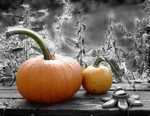 black and white pumpkin www imgkid com the image kid has it