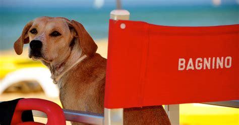 bagno ai cani bau rimini vacanze al mare con il il di