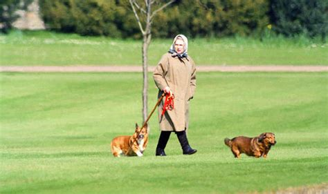 how many corgis does the queen have it s a dog s life queen s corgis served steak on silver