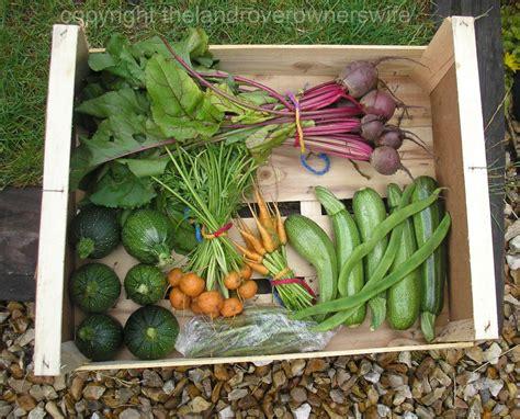 Gardening Club When Is A Carrot Not A Carrot The Land School Vegetable Garden