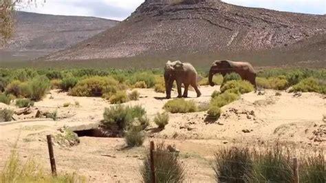 Aqilla Cape cape town day 8 vlog aquila big 5 safari 1080p hd
