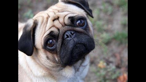 imagenes de cumpleaños lindos v 237 deo ra 231 as de cachorros mais fofos do mundo c 227 es lindos