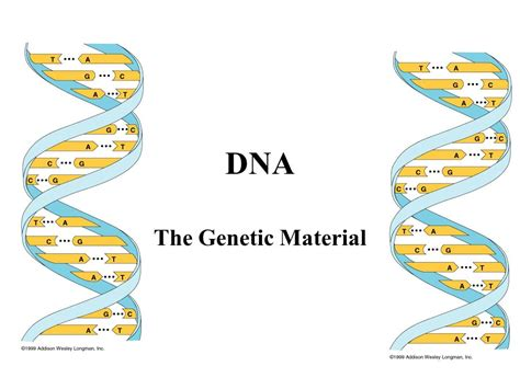 All Systems Go For Tuesday Dna Reveal by Dna The Genetic Material Ppt