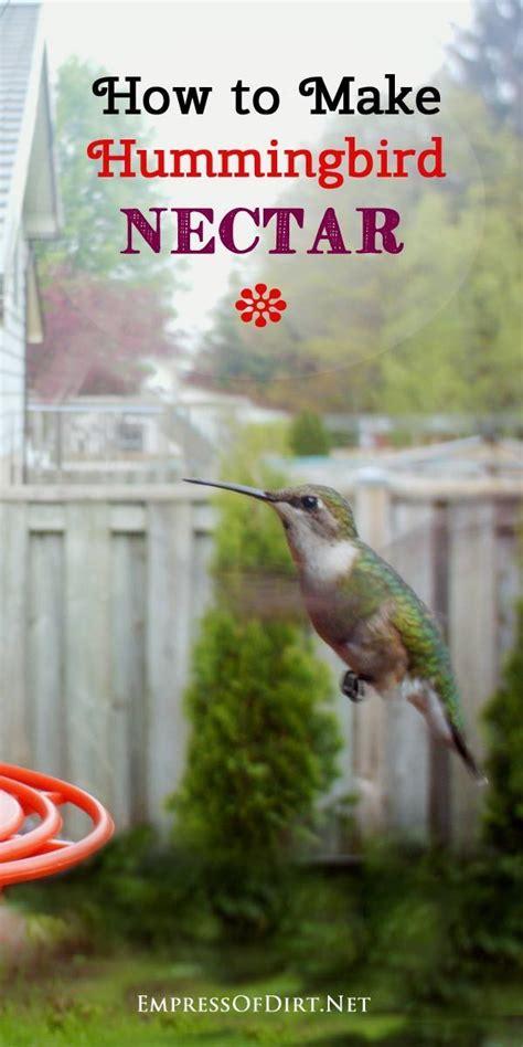 best 25 hummingbird food ideas on pinterest hummingbird
