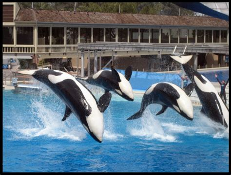Wedding Anniversary Ideas San Diego by 521 Best Seaworld Images On Killer Whales