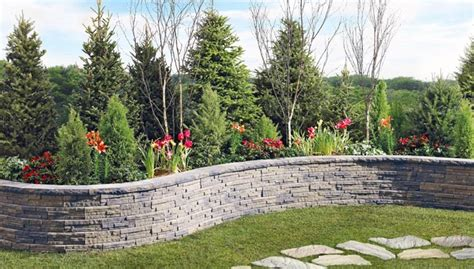 Best Backyard Trees For Privacy Design Your Landscape