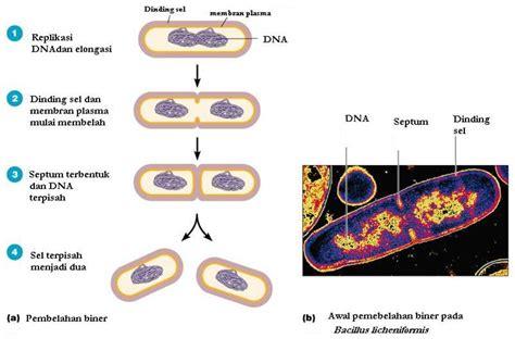 Genetika Tumbuhan L V Crowder agricultural engineering reproduksi sel