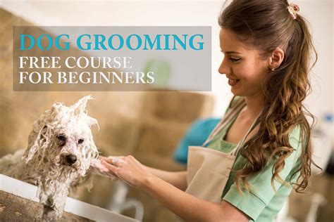 how to to be a groomer how to groom a the largest free course for beginners all in one