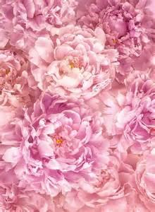 Rosa Blumen by Fototapeten Zu Besten Preisen Vliestapete