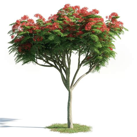 Delonix Set delonix regia 20 am154 3d model obj cgtrader