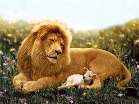 the lion and the lion and lamb wallpaper wallpapersafari