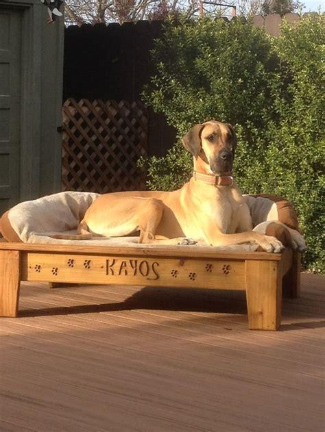 raised dog bed diy excellent diy elevated dog bed like kuranda pet project