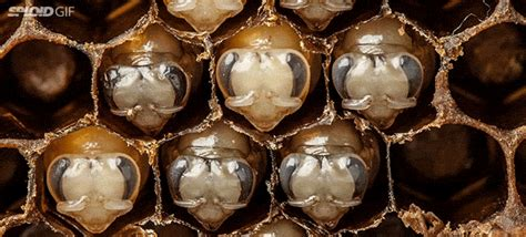 awesome time lapse shows the entire transformation of bees