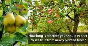 what time of year do you plant fruit trees in how many days my tree will give fruit