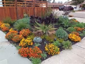 drought resistant landscape farallon gardens alameda drought tolerant garden