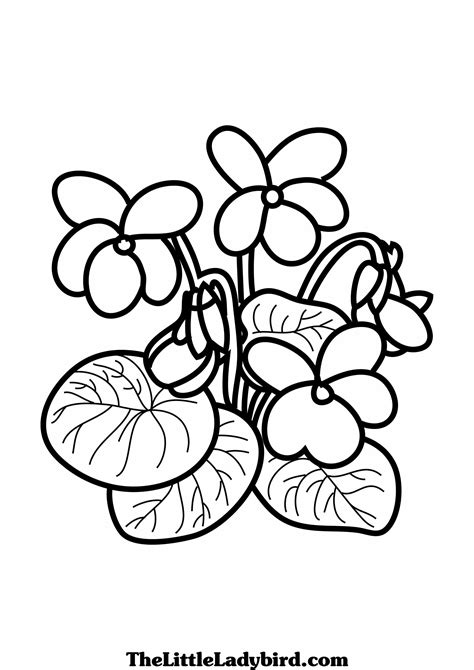 Violet Coloring Page free flowers coloring pages thelittleladybird