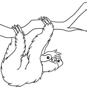 realistic drawing of sloth coloring page color luna