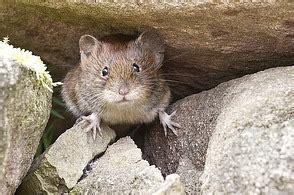 Was Ist Eine Maus by Ist Das Eine Maus Wer Z 228 Hlt Wirklich Zu Den M 228 Usen