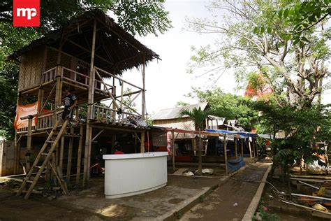 Cacing Sutera Tangerang budidaya cacing sutera tangerang merahputih