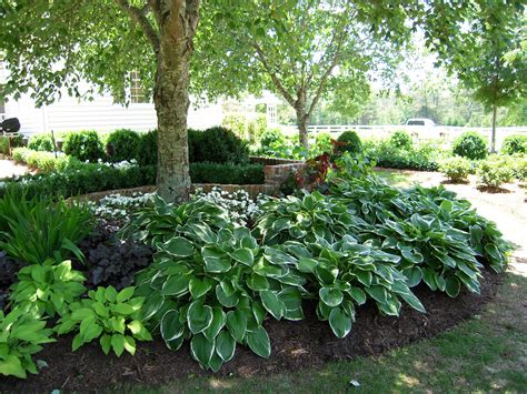backyard planting ideas shade gardens