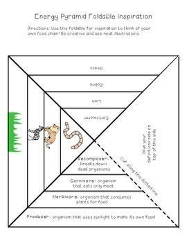 Ecological Pyramids Worksheet by 1000 Ideas About Ecological Pyramid On