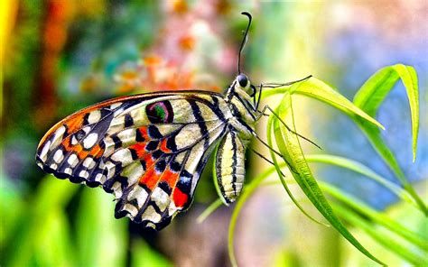 Butterflies Full Hd Wallpaper And Background Image | lovely beautiful birds butterfly hd wallpapers photos