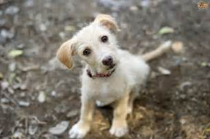 home for rescue a few myths about rescue dogs debunked pets4homes
