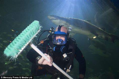 Mr Cleaner By Han Aquarium spends 7 hours a day cleaning blue planet aquarium s