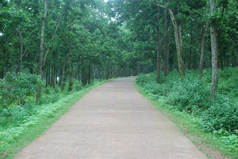 netarhat tourism  jharkhand top places travel guide