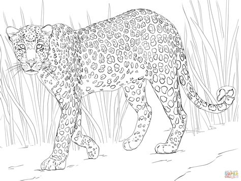 leopard color leopard coloring page free printable coloring pages