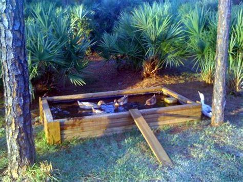 backyard duck pond my duck pond backyard chickens