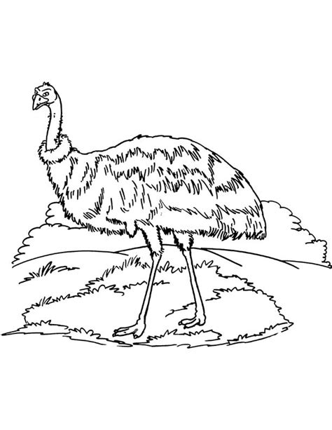 emu coloring page free australian emu coloring page download free australian